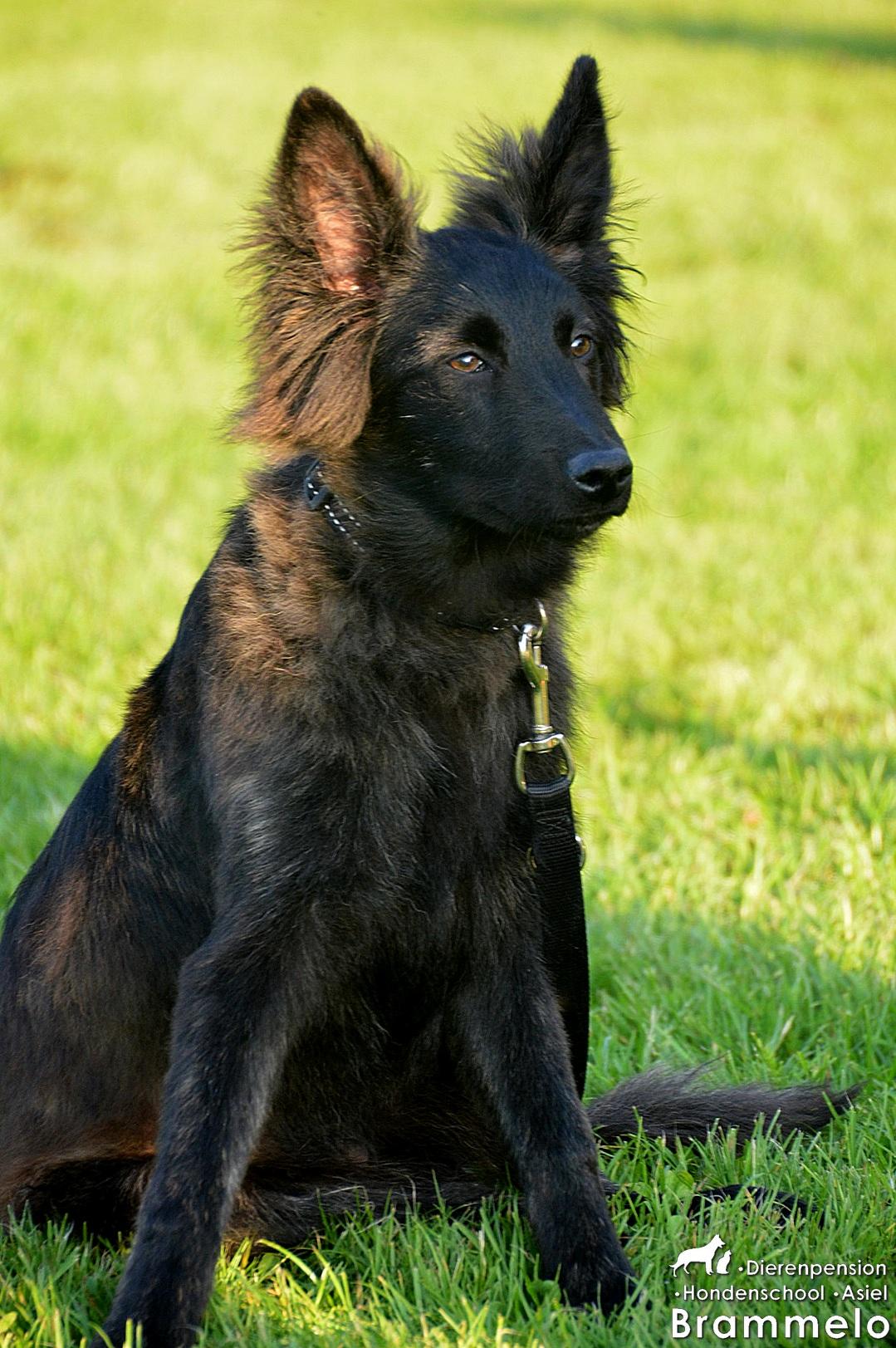 De honden! (2)